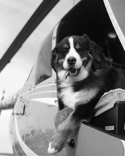 «Пилот, работающий за угощения»👨✈️🦴 К