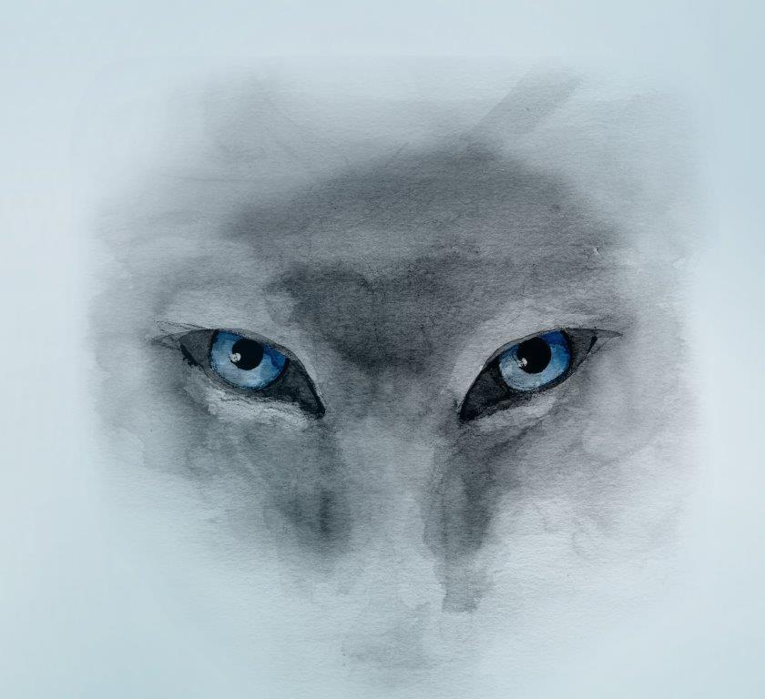 Vlk, modré oči, en face, akvarel