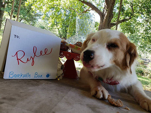 Barkville Monthly Box