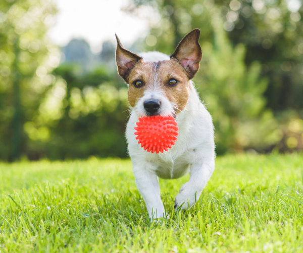 Getting a pet is a big commitment but it has huge benefits for you, and for your pet.