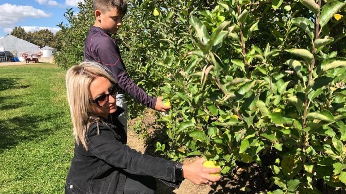 If you do a lot of bending during apple picking over you should make sure to only bend at your knees and hips in  order to reduce and prevent muscle strain