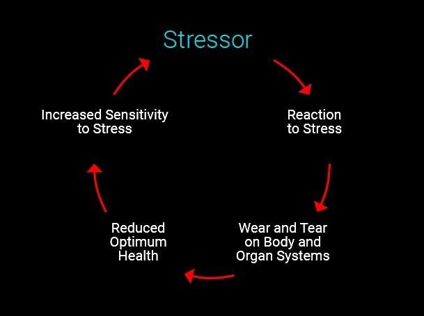 As individuals interact with their environment, physical and psychological stressors  can lead to adaptive or maladaptive neural and hormonal responses.
