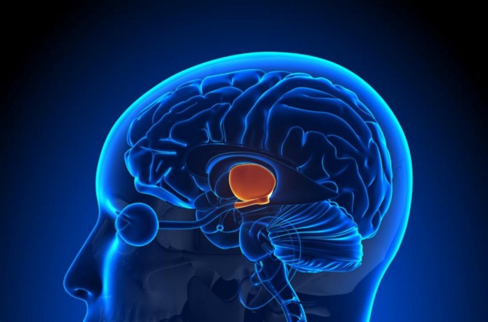 New research shows that the brain plays an important part in pain regulation and perception.