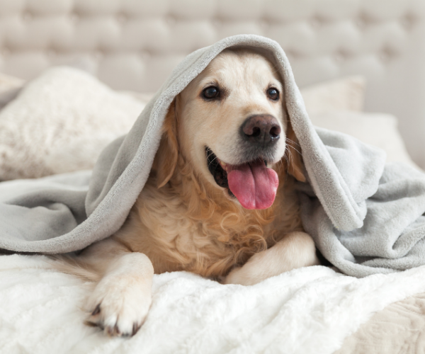 Therapy dogs have been found to reduce pain and improve depression in pain patients.