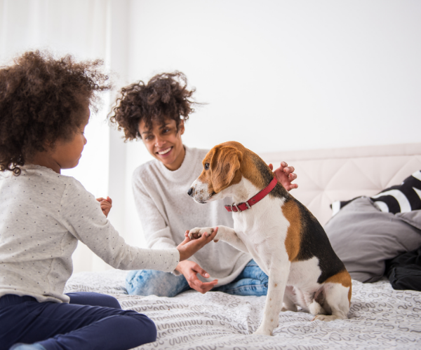 pets are being used in hospitals and outpatient clinics to help speed along recovery and provide comfort and reassurance to those undergoing medical procedures.