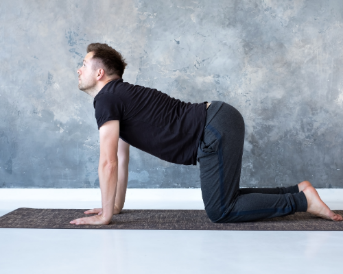 In cow pose the spine is extended and the sternum  and tailbone are lifted, lengthening everything.