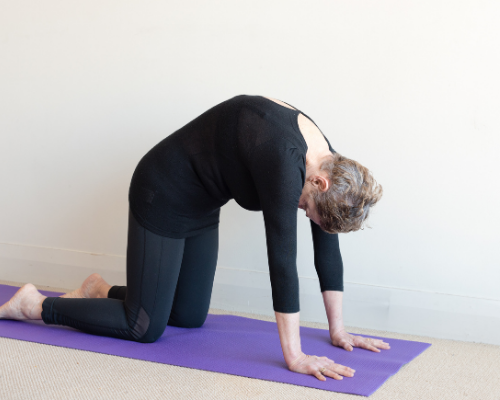 The cat cow stretch is a great stretch for low back pain, since incorporating both movements ensures that your spine is fully mobilized.
