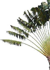 palmier dte.jpg