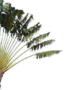 palmier gauche.jpg