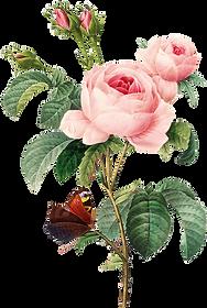 HTC_Heritage Library_Rose Garden 02 Elem