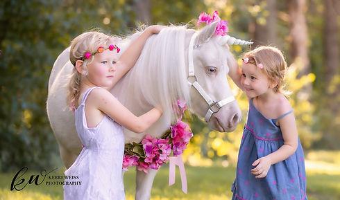 CreamPuff the mini therapy unicorn