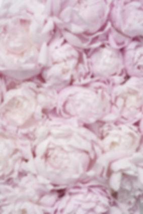 floral bckg.jpg