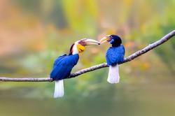 Kaziranga-National-Park-assam-wreathed-h