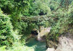 cherrapunjee_rain_forests_566054