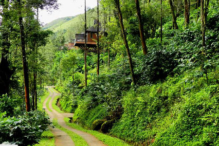 COORG  (6)