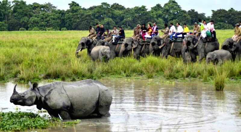 elephantsfari
