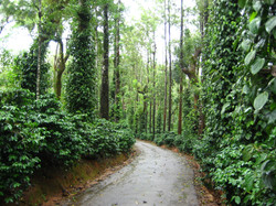 COORG  (12)