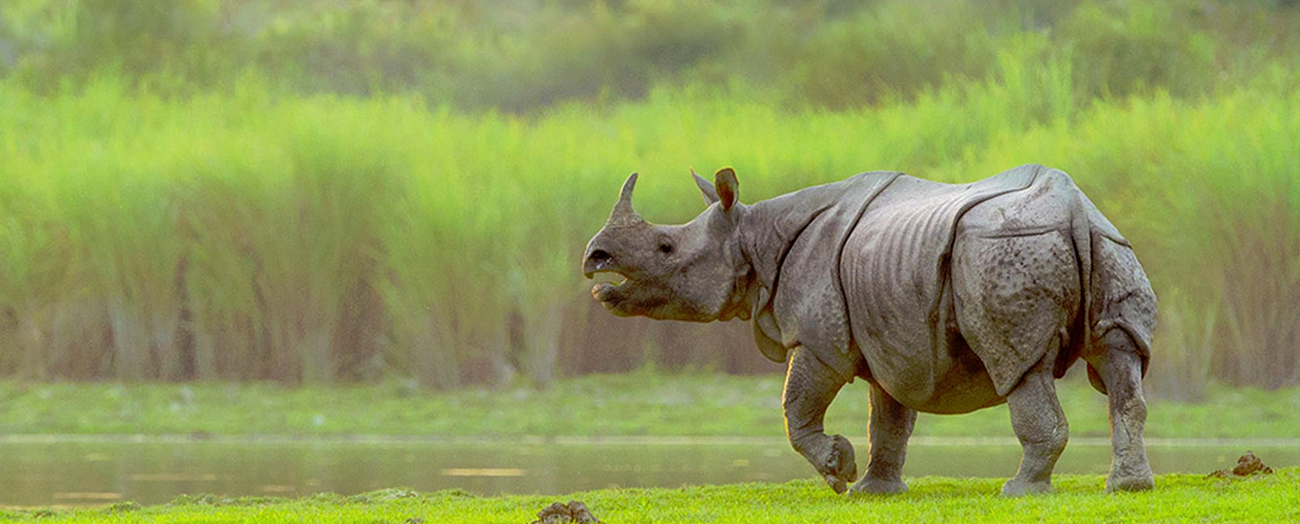 kaziranga-national-park3