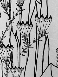 plantes geometrique