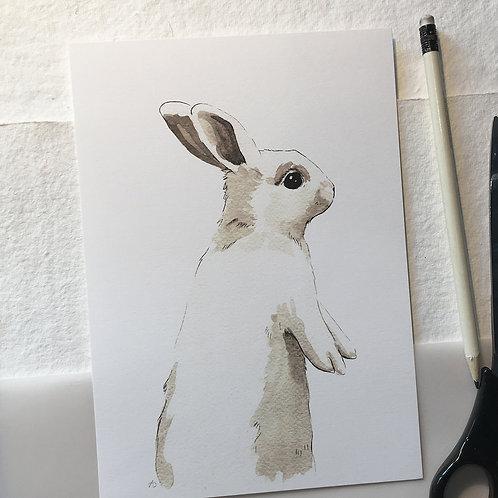 Lapin oreilles droites