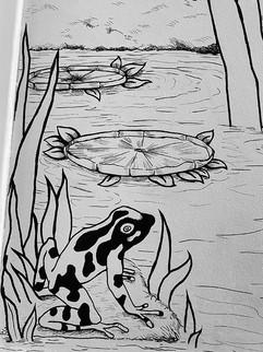 grenouille et nenuphar