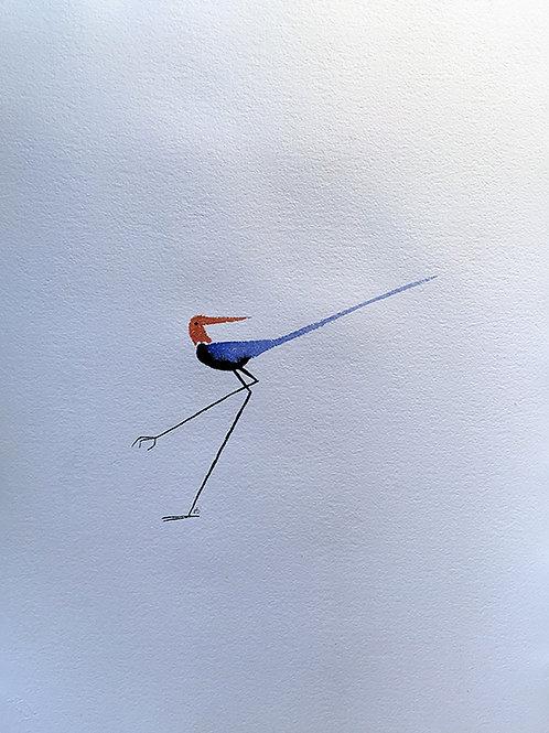 Oiseau fin