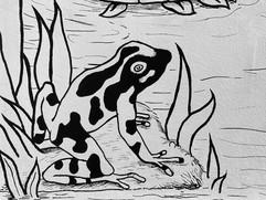 grenouille noir blanc