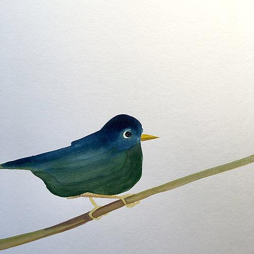 Oiseau vert du printemps