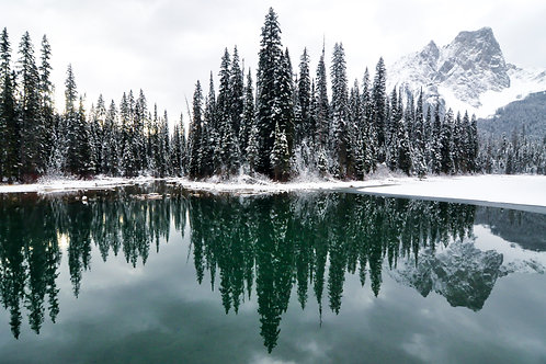 Emerald Lake Forest