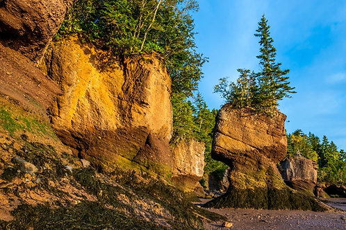 Fundy Shore