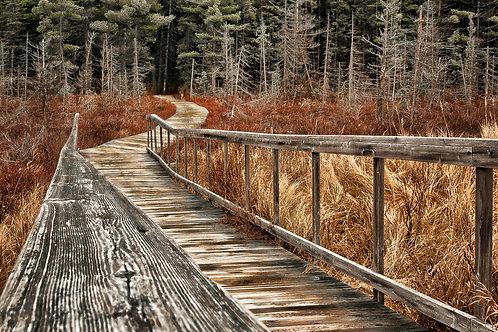 Spruce Bog Boardwalk - Algonquin Park