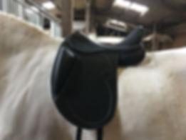 Pluskussen op het paard.jpg