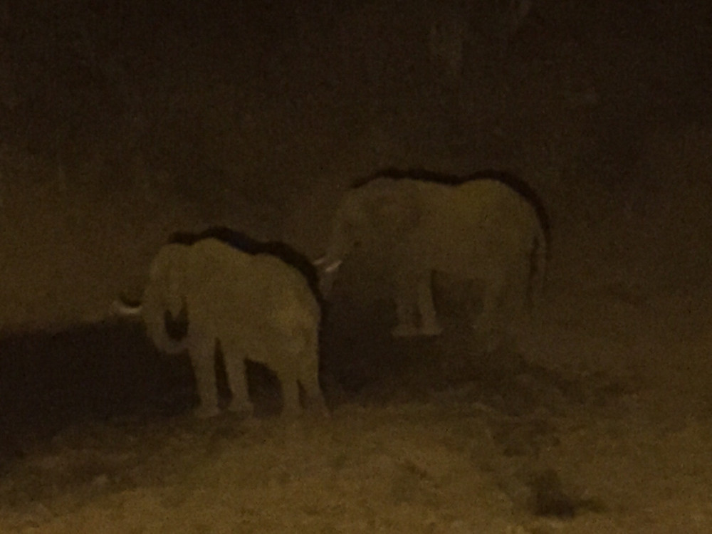 Elephant in front of camp