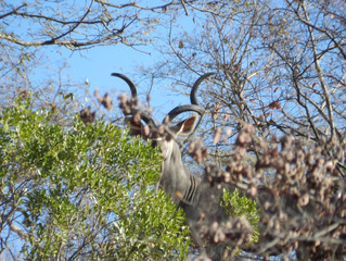 Day 6 with Lindon in West Nichelson (3rd Safari)