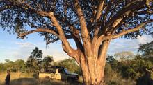 Lindon's First Safari for 2016 -  Hwange Communal Land