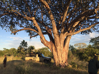 Lindon's First Safari for 2016 -  Hwange Communal Land