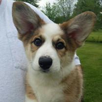 rosette-puppy.jpg