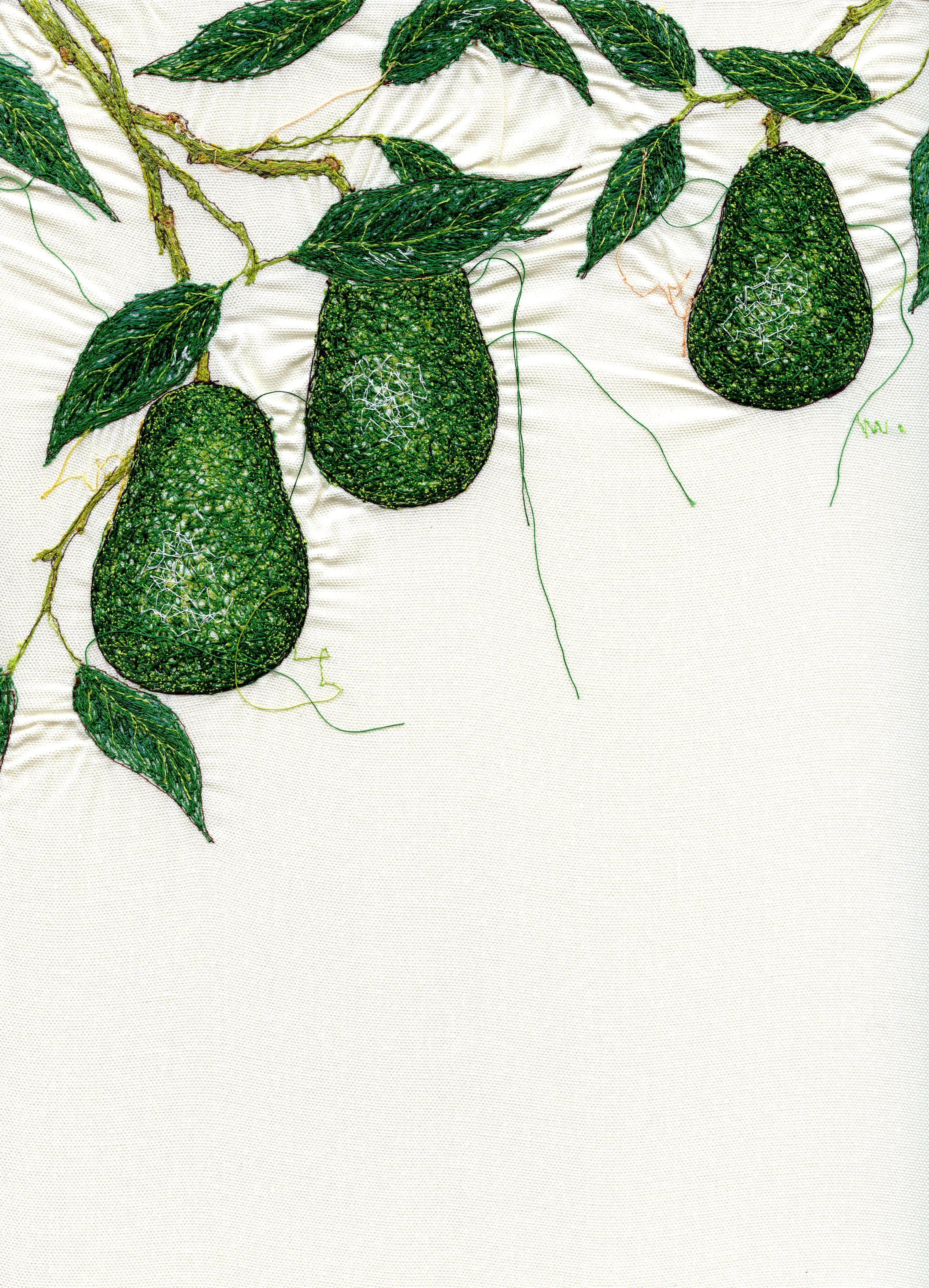 avocado001