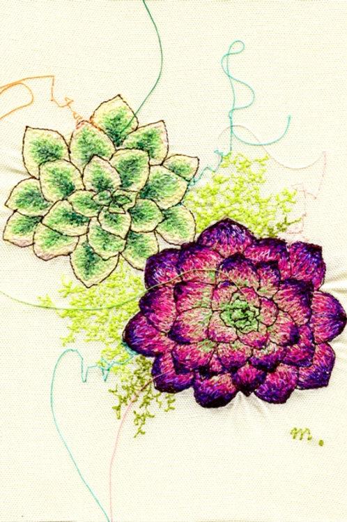5x7 Succulents