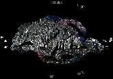Logo_Sapegno2.png