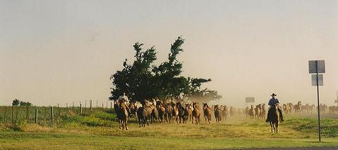 gathering horses 2.jpg