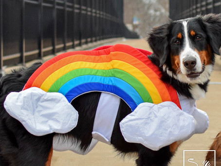 Tower Grove Pride Is A Pet Friendly Pride Thanks To Treats Unleashed!