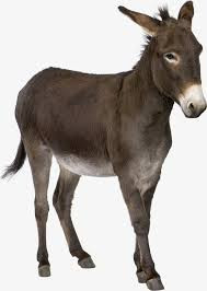 Look for the donkey!