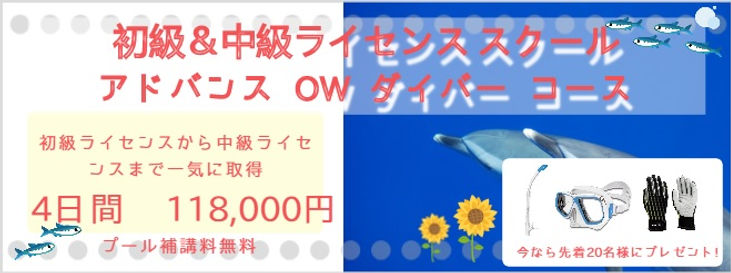 初級・中級ライセンス.jpg