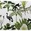 Thumbnail: Set 4 placemats jungle