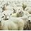 Thumbnail: Set 4 placemats schapen