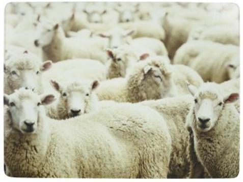 Set 4 placemats schapen
