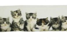 Tochtkussen katten
