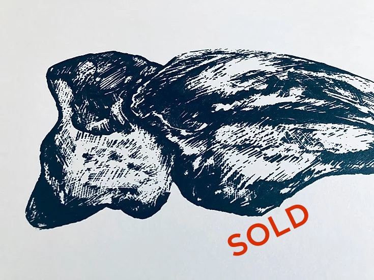Tyrannosaurus Rex foot claw (actual size) serigraph