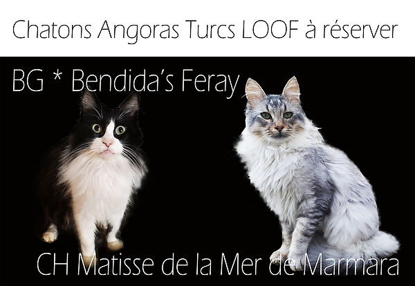 annonce_chatons parents.jpg